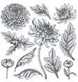 Set hand drawn chrysanthemum flowers