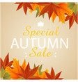 special autumn sale maple leaf background i vector image