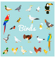 a set of domestic and wild birds in a flat style vector image