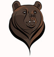 bear head vector image vector image