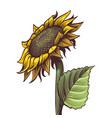 hand drawn sunflower yellow wildflower in sketch vector image vector image
