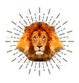 lion in triangle style with burst vector image