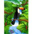 toucan bird vector image vector image
