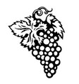 black and white sketch of bunch of grapes with vector image vector image