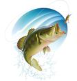 Largemouth bass catching a bite vector image