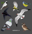 set of popular urban birds vector image vector image