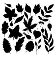silhouettes of leaves and berries vector image vector image