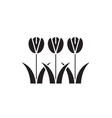 tulips flowers black concept icon tulips vector image
