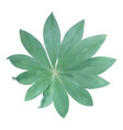 green leaf isolated on white background vector image
