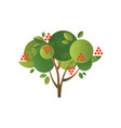 rowan garden tree with ripe berries vector image