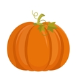 Pumpkin isolated on white background vector image