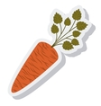 carrot vegetable isolated icon vector image