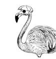 familiar flamingo in cap and black sunglasses vector image vector image