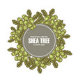 background template with shea tree branch nuts vector image vector image