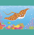 spotted ray over a reef vector image vector image
