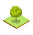 willow tree isometric 3d icon vector image vector image