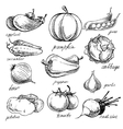 Set of various doodles hand drawn vegetables vector image vector image