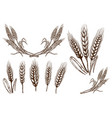 set of wheat spikelet on white background design vector image