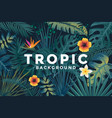 tropical background 2 vector image vector image