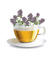 aromatic tea with thyme in a transparent cup vector image