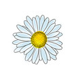 beautiful doodle sketch daisy flower with outline vector image vector image