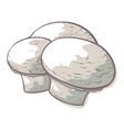 champignon edible mushroom icon fresh raw food vector image vector image