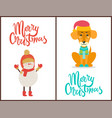 merry christmas congratulation with winter symbol vector image