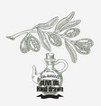 olive oil hand drawn olive tree and vector image vector image
