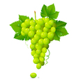 White Grapes vector image vector image