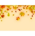 autumn card of multicolor leafs vector image vector image