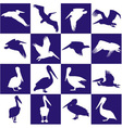 Blue and white background with pelican vector image vector image