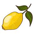 bright fresh ripe lemon concept vector image
