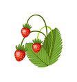 hand drawn branch wild strawberries berries vector image