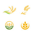 agriculture wheat rice icon design vector image