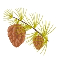 Branch of the conifer vector image vector image