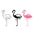 outline and silhouettes flamingo isolated vector image vector image