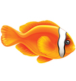 Tomato clownfish vector image vector image