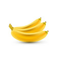 banana realistic isolated bananas realistic vector image