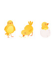 funny yellow chicken in different situations set vector image