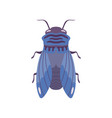 blue fly insect top view flat vector image vector image