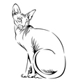 cat sphynx black vector image