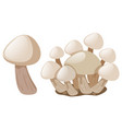 fresh mushrooms on white background vector image vector image