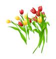 icon tulip vector image vector image