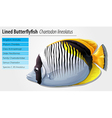 Lined butterflyfish vector image vector image