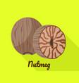 nutmeg icon flat style vector image vector image