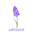 stylized lavender icon vector image vector image