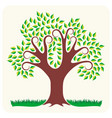 tree in summer vector image