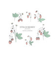 hand drawn strawberry set vector image vector image
