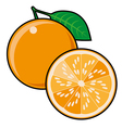 Orange isolated on a white background vector image vector image