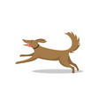 pet dog running breed with tongue isolated vector image vector image